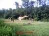 deer-and-fawns-hanging-bag-august-2010